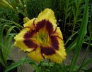 <p>Hemerocallis &acute;Calico Jack&acute;</p>
