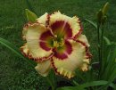 <p>Hemerocallis &acute;Lady Betty Fretz&acute;</p>